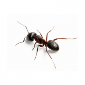 mierendasongediertebestrijdenincecticiden01